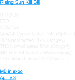 Rising Sun Kill Bill